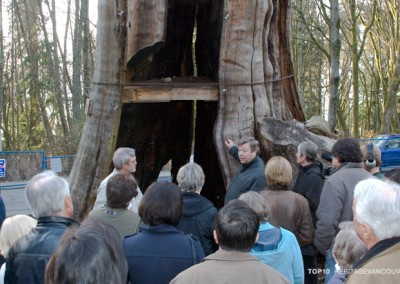 10. Hollow Tree (Stanley Park) [saved]